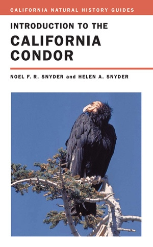 Introduction to the California Condor by Noel Snyder, Helen Snyder