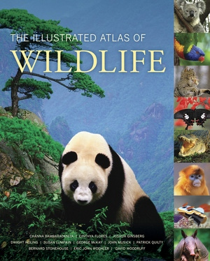 The Illustrated Atlas of Wildlife by Channa Bambaradeniya, Cinthya Flores, Joshua Ginsberg