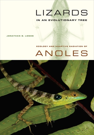 Lizards in an Evolutionary Tree by Jonathan Losos