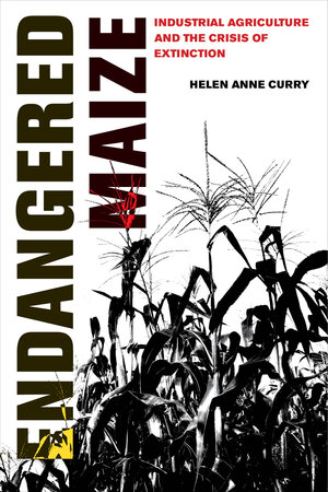 Endangered Maize by Helen Anne Curry