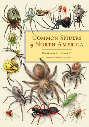 Common Spiders of North America by Richard A. Bradley