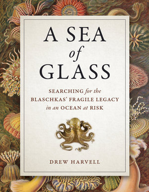 A Sea of Glass by Drew Harvell