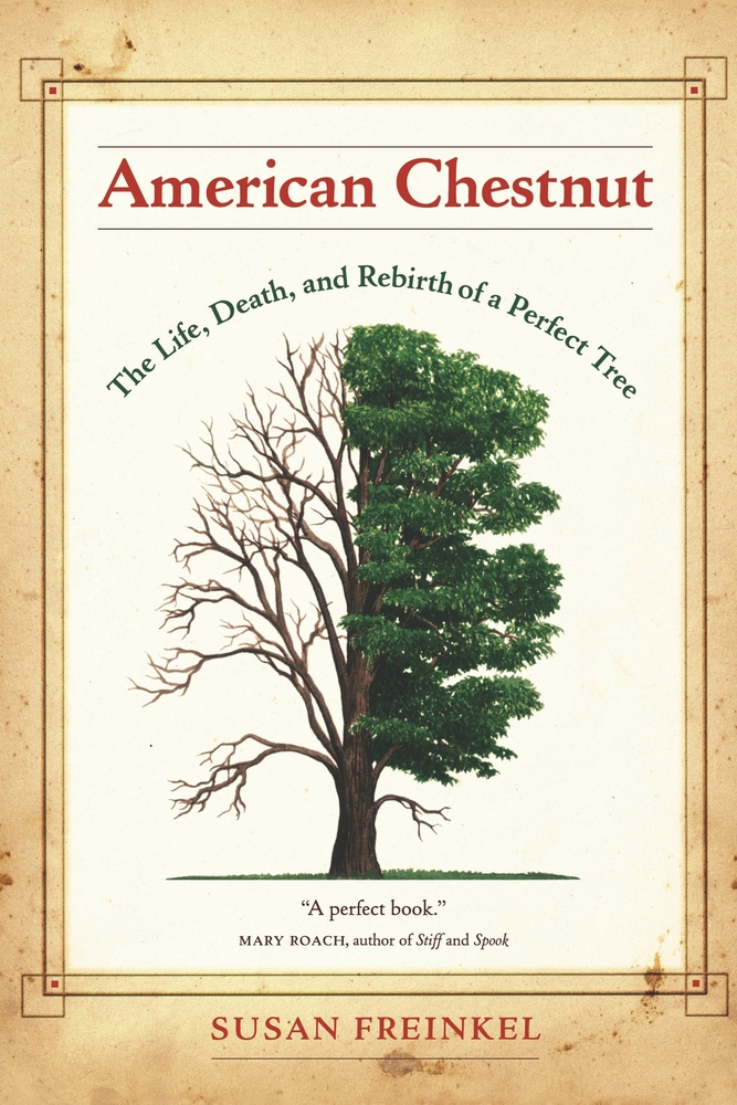 Image result for american chestnut book cover
