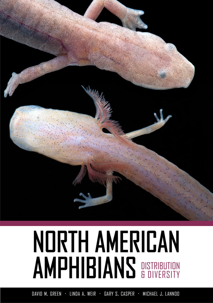 North American Amphibians Edited By David M Green Linda A - Us amphibian distribution maps