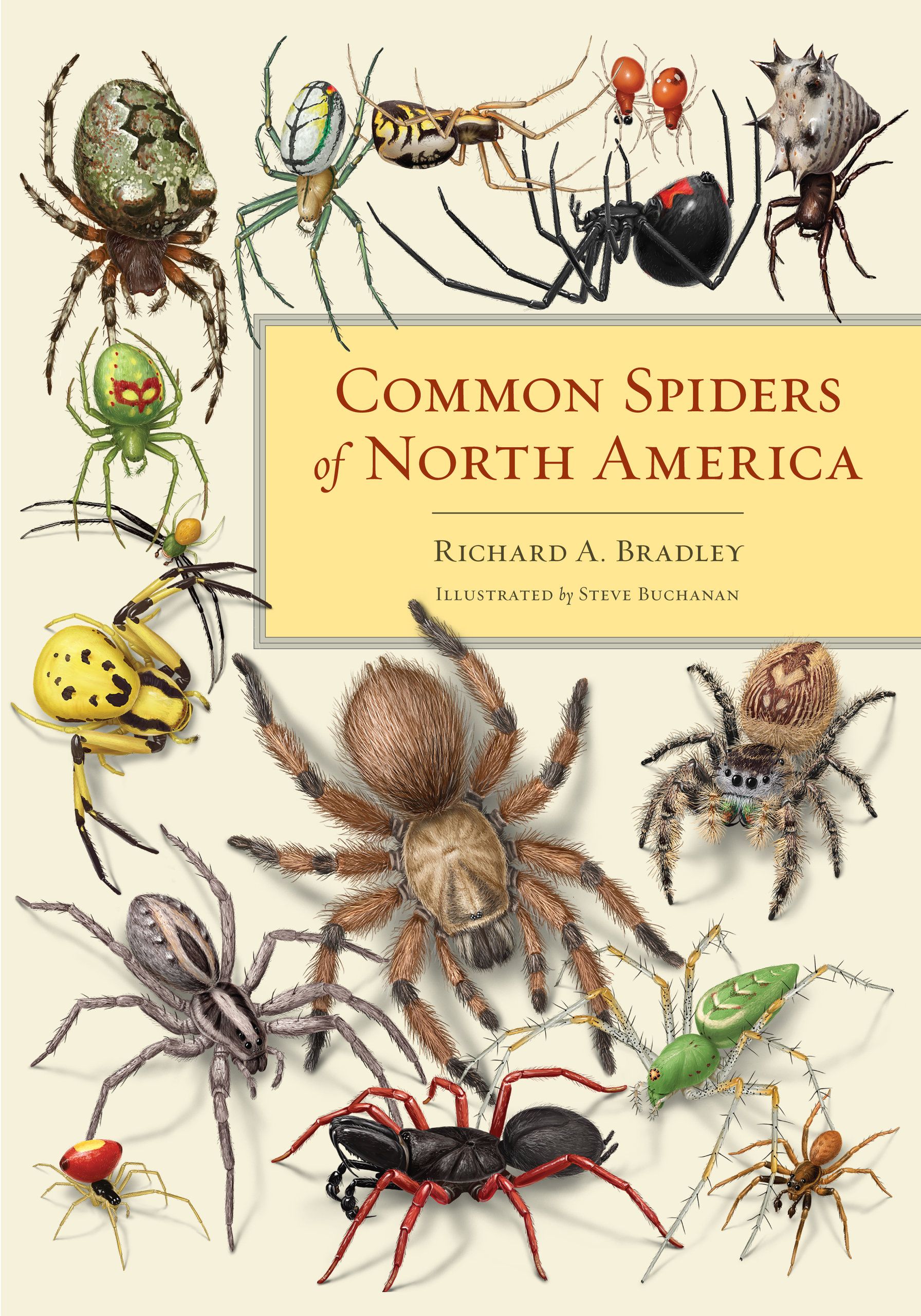 The Common Spiders Of The United States