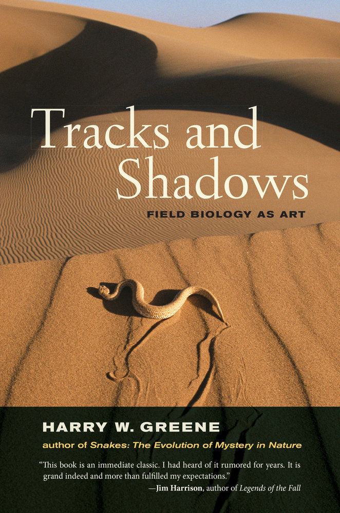 Shadowed Choices: Book Two of The Shadow Wood Chronicles